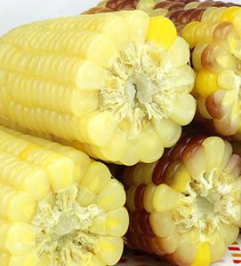速冻糯玉米